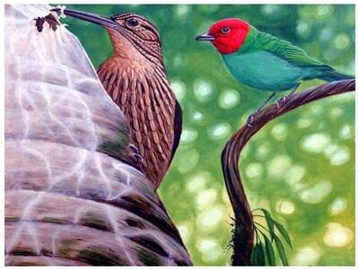 embiid2_birds.jpg