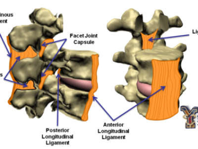 Spinal Ligament Characterization