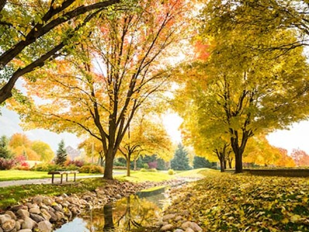 A beautiful fall scene with yellow leaves on the trees and a rocky creek bed.