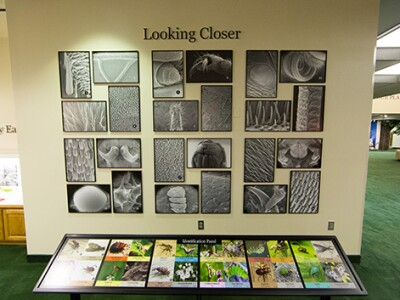 looking closer insects exhibit.jpg