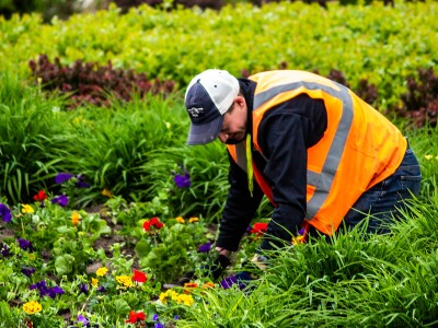 Grounds employee planting flowers on campus.
