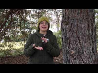 Week 10 - Trees Part 2