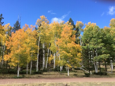 Aspen Ecology and Management