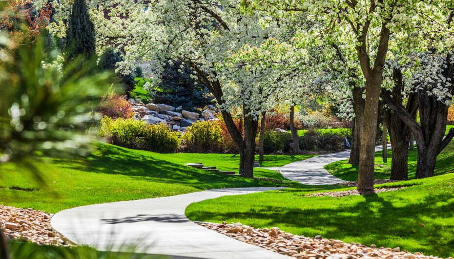 path lined with blossoming trees at BYU