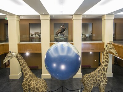 bean museum giraffes.jpg