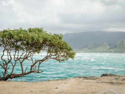 Image of the Point in Laie, Hawaii