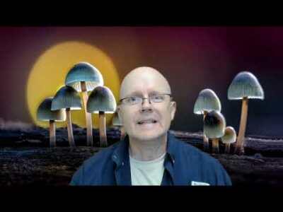 Are Fungi Plants?