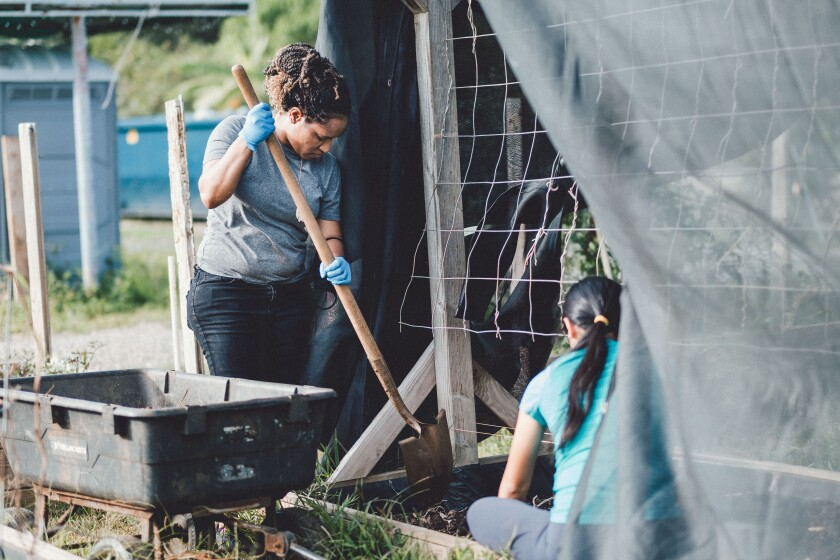 BYUH students do gardening work at the Sustainability Center farm