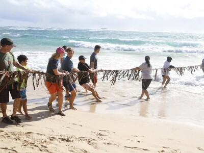 Group of people pulling on a rope at the beach