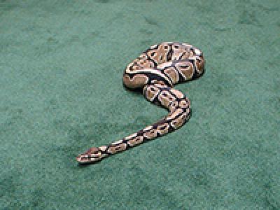 snake on green carpet.png