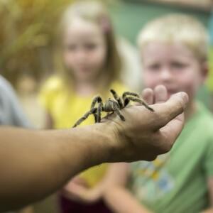 Image: a Tarantula.