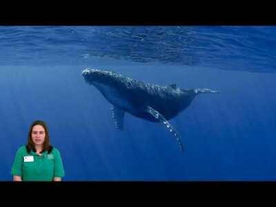 Week 11 - Blue Whale