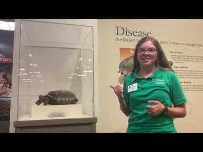 Week 5 - Desert Tortoise