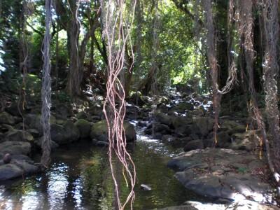Oahu stream.jpg