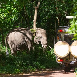 photo of elephant and tourist vehicle