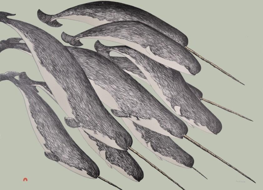 Allangua (Narwhal)