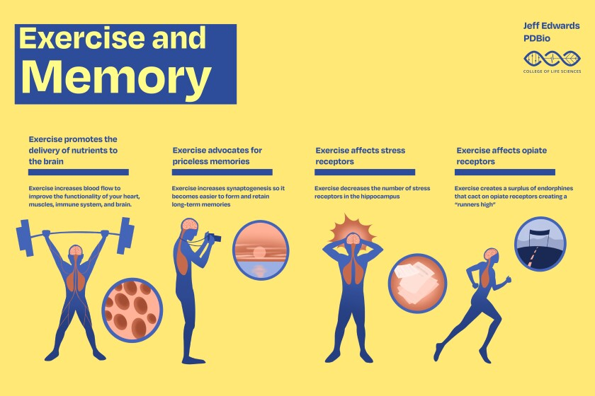 Exercise and memory infographic