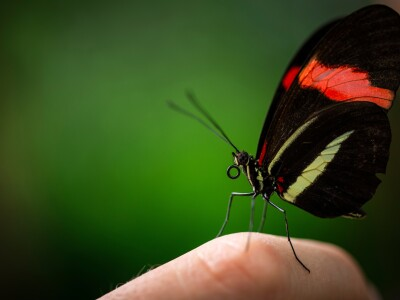 Analysis of butterfly genomes reveals answers to complex evolutionary history questions