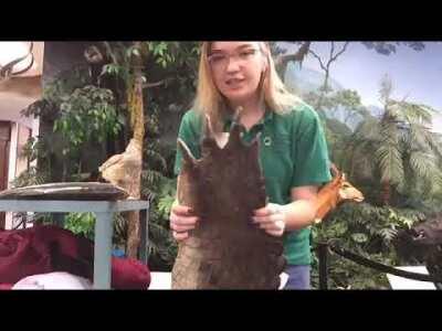 Animal Coverings