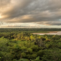 photo of amazon river and forest