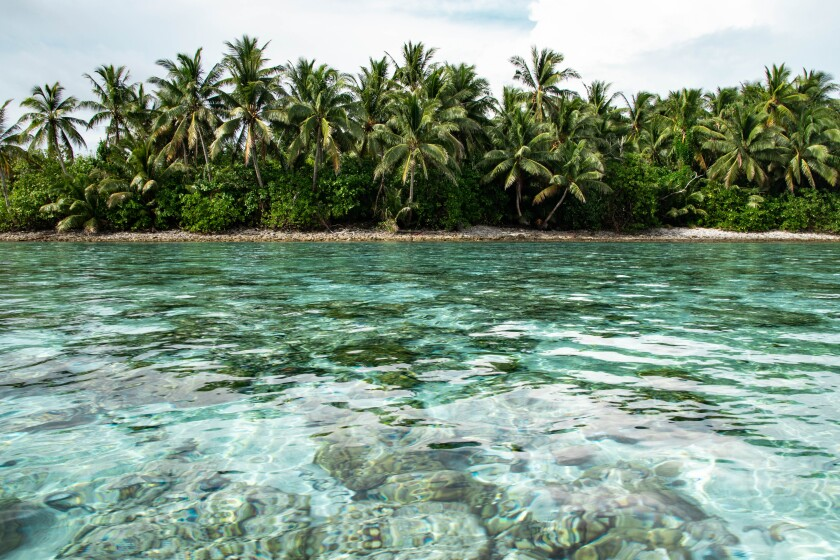 A clear ocean with coral underneath and palm trees on an island in front.