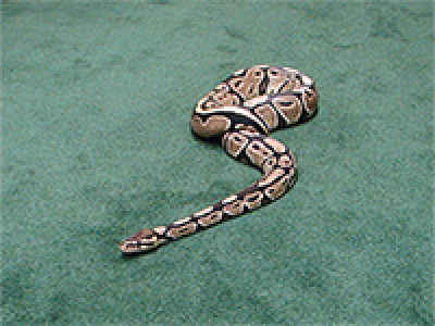 snake on green carpet.png