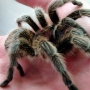 spider on a hand.jpg