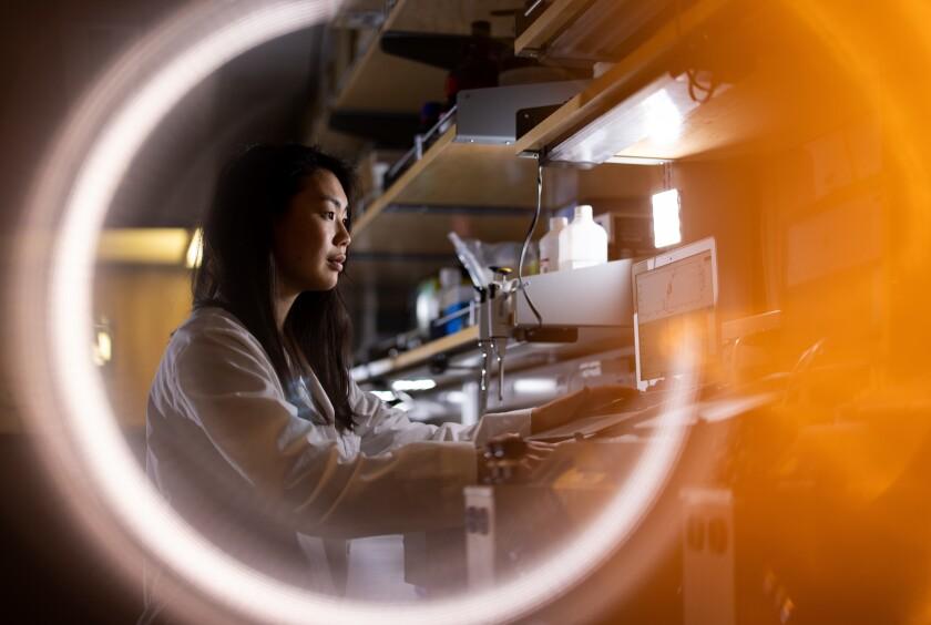 Ph.D. student Erin Saito enters data into a computer in the lab of Professor Benjamin Bikman.