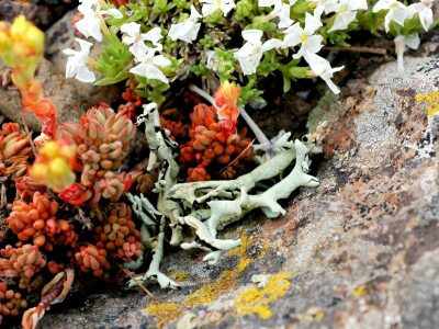 Facebook: Lichens in Real Life