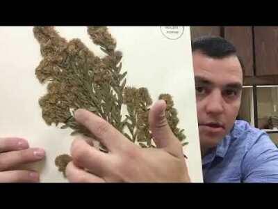 Herbarium (Vascular Plant Collection)