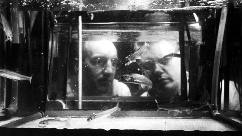 two men observing fish tank BW.jpg