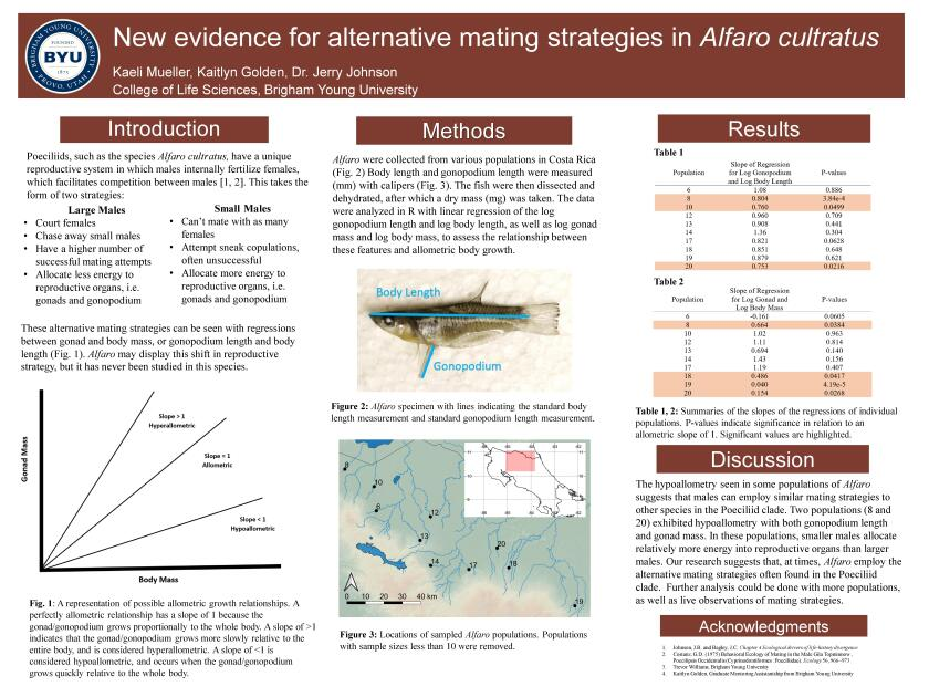 "2nd place research poster, ""New Evidence for Alternative Mating Strategies in Alfaro Cultratus."""