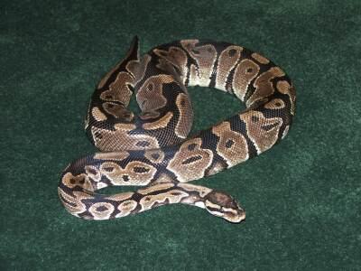 Cuddles the snake.jpg