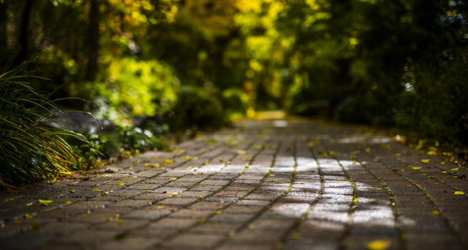 A brick path on BYU campus