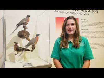 Week 8 - Passenger Pigeon