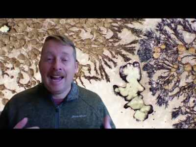 What are lichens?