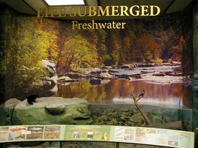 Life-Submerged freshwater exhibit.jpg