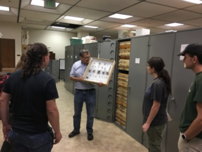 Ask a Scientist & Collection Tours
