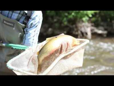 Cutthroat Trout Research