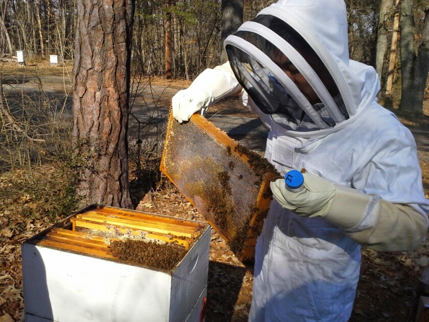 Josh Kawasaki dressed in full protective gear checking a beehive
