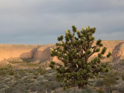 lytle preserve.jpg