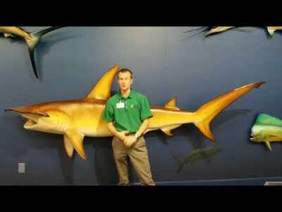 Week 7 - Hammerhead Shark