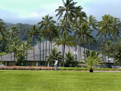 Palm Trees on campus at BYU–Hawaii.