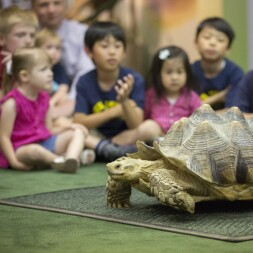 Image: a Tortoise.