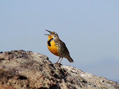 Study reveals birds' surprising sound source