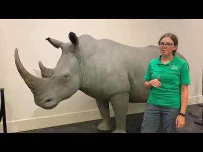 Week 2 - White Rhino