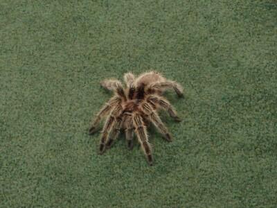 Rosie spider.jpg