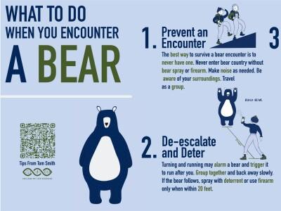 What to do when you encounter a bear