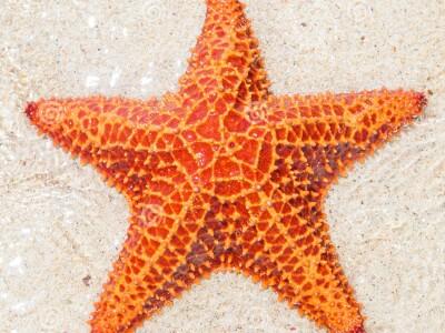 SeaStar.jpg