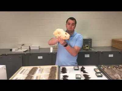 Mammal Collection